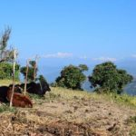 Agriculture and Environmental Programs in Nepal