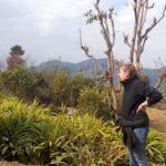 Black Cardamom Farming in Nepal with cardamom price in Nepal