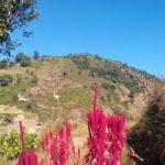 Organic Farming Volunteer in Nepal