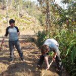 Organic farm volunteering Nepal