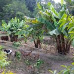 Importance of organic farming in Nepal